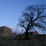 Un arbre à l'écart de l'agitation de la ville d'Istanbul, sous lequel je m'abrite avant de reprendre ma route en autostop vers la France. https://david-pagnon.com/ecrits/une-tente-un-pouce/
