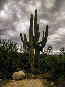 Cactus monumental en Arizona.