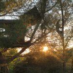 Des traceurs cheminant dans les arbres à Miramas.