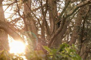 J'aime énormément les arbres, et celui-ci est magnifique.